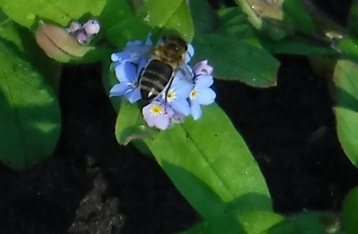 Frühling auf dem FaBa Land